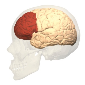 Pre-frontal Cortex. For Edmund K. Saunders Esq., Hours of Operation: 5:30 - 10:30 / 12 - 14:30 / 18:00 - 21:00